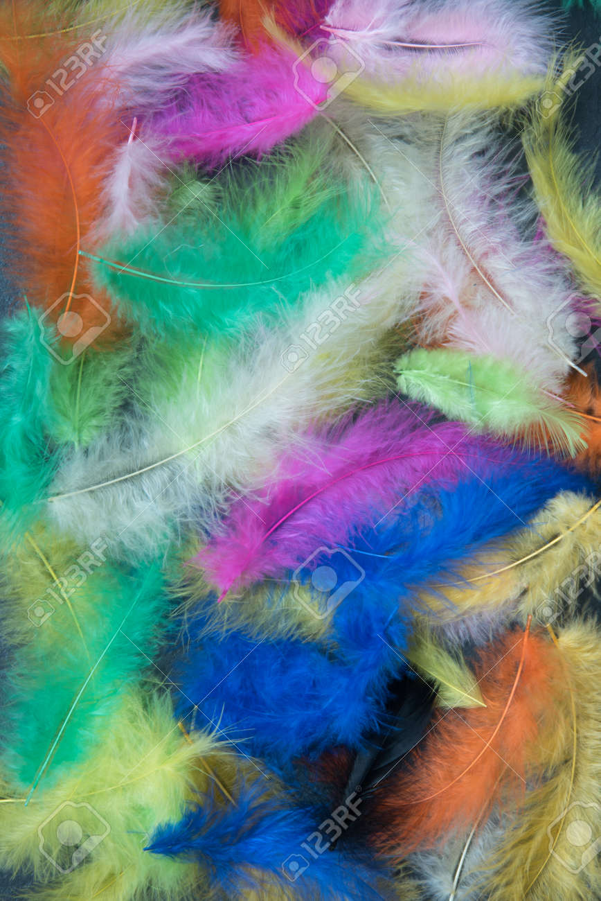 Feathers of different colors. Background, feather texture. An abundance of color - 168593950