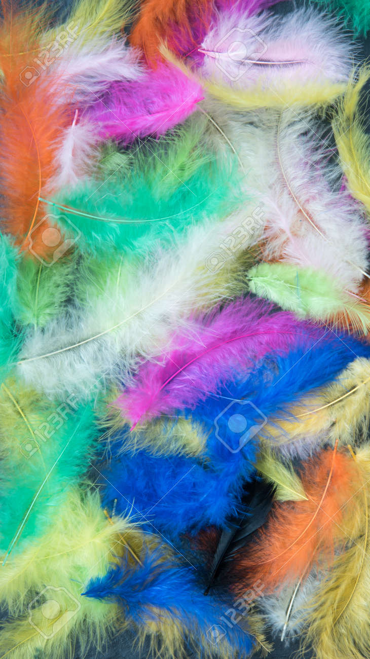 Feathers of different colors. Background, feather texture. An abundance of color - 168593953