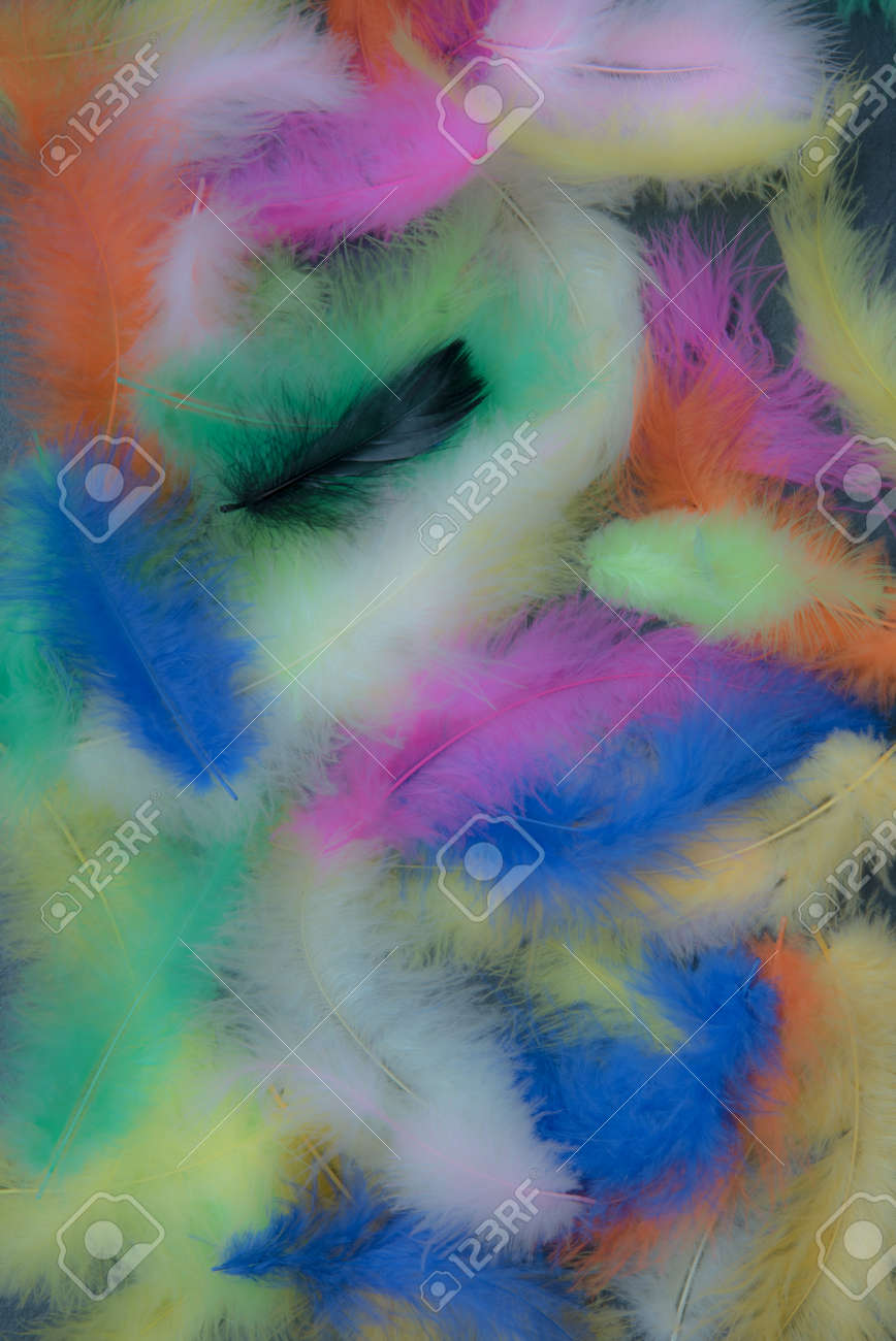 Feathers of different colors. Background, feather texture. An abundance of color - 170095388