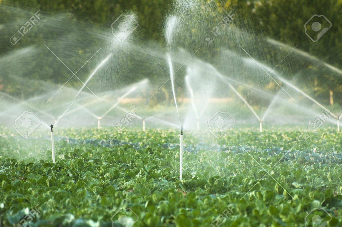 Beautiful Irrigation Systems In A Green Vegetable Garden Stock Photo   15641325