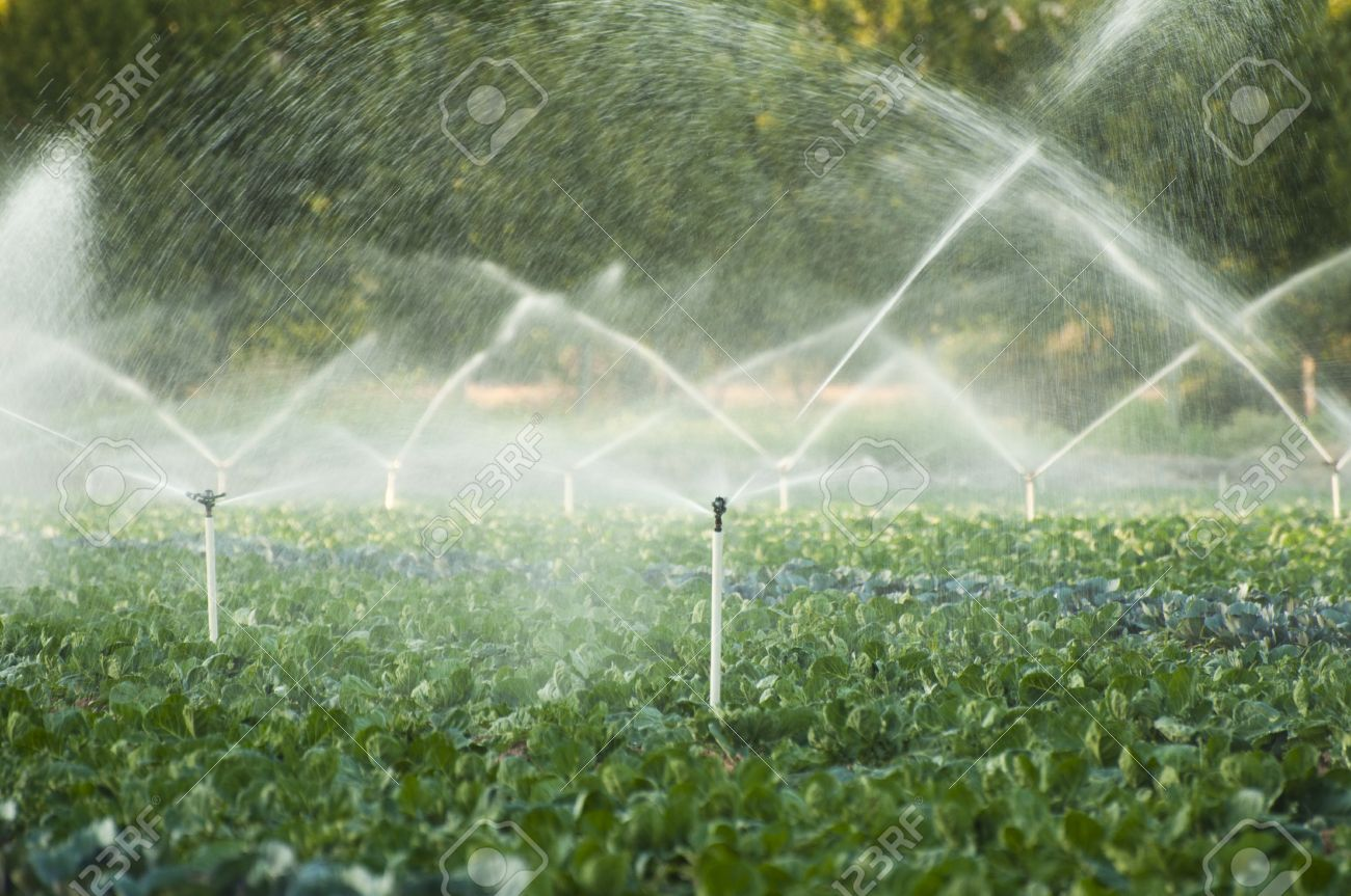 irrigation systems in a green vegetable garden stock photo - Irrigation Systems