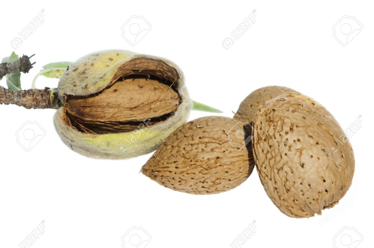 Almonds and leafs over white Stock Photo - 15818133