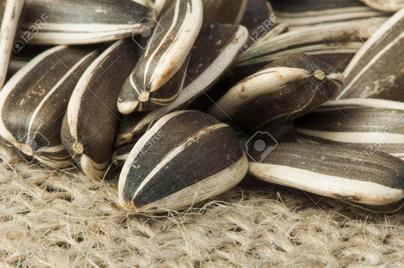 Closeup sunflower seeds on burlap. Studio shot Stock Photo - 17515777