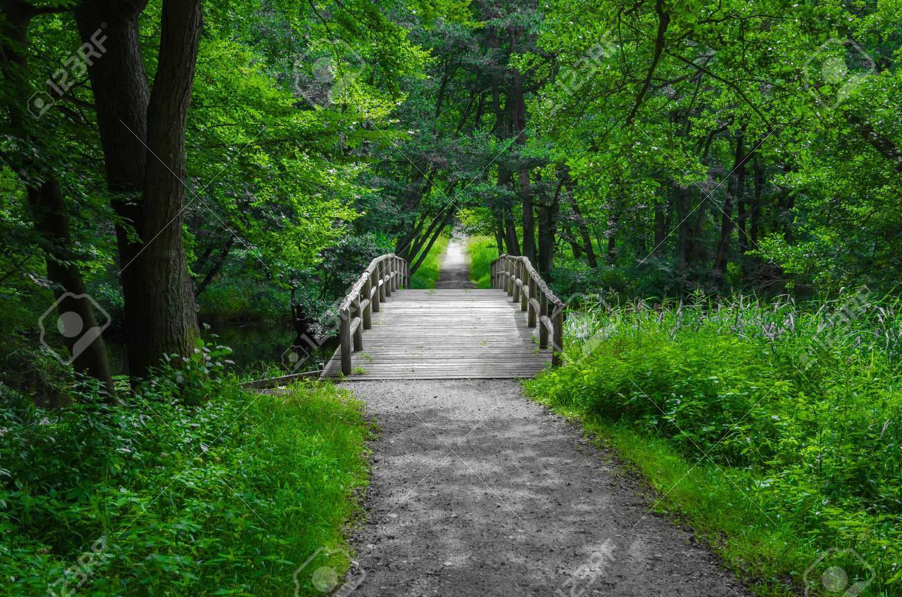 Old charming and romantic wooden bridge over a creek in the middle of the forest - 27344920