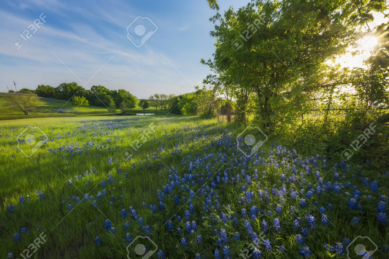 Rural Texas Spring Flowers Reflecting On A Pond Stock Photo Picture