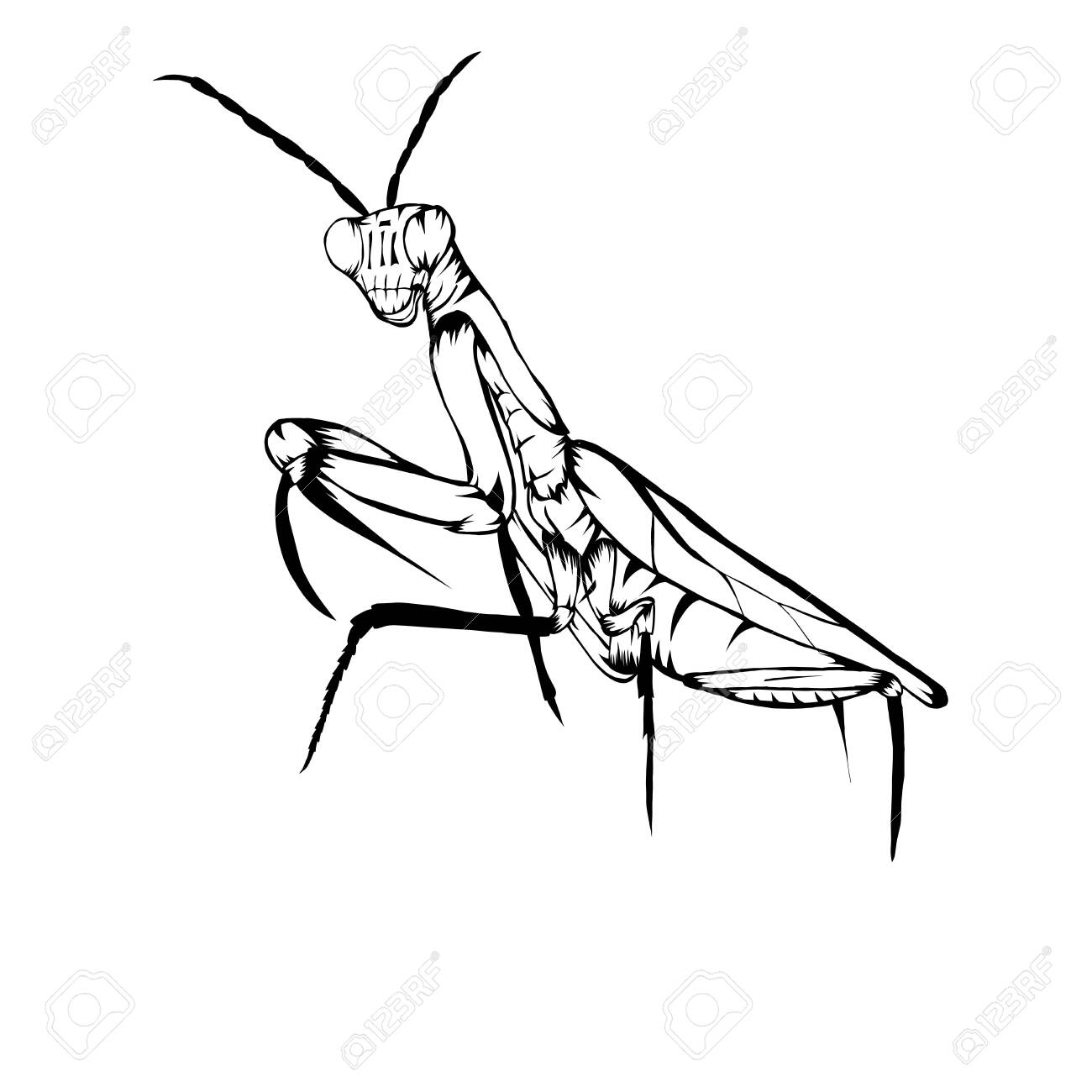 Sketch Design Of Illustration Praying Mantis Royalty Free Cliparts Vectors And Stock Illustration Image 142071706