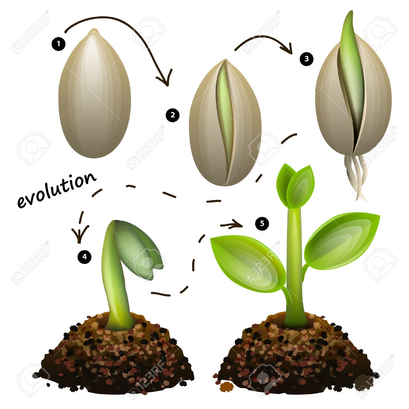 35,550 Evolution Stock Vector Illustration And Royalty Free ...