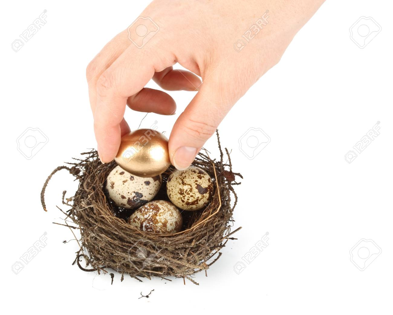 Gold egg in a real nest. Concept for success. Stock Photo - 4359869