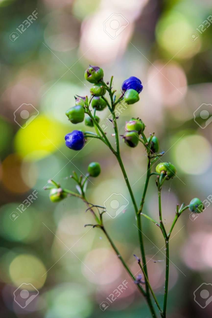 Une Fleur Sauvage Proche Bleue Dans Une Foret Tropicale De Thailande