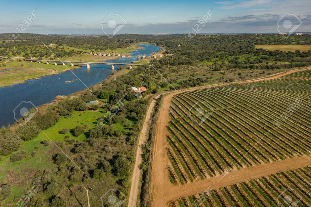 Aerial view of the industrial griculture landscape and the river Guadiana in Olivenza Extremadura Spain - 165012376
