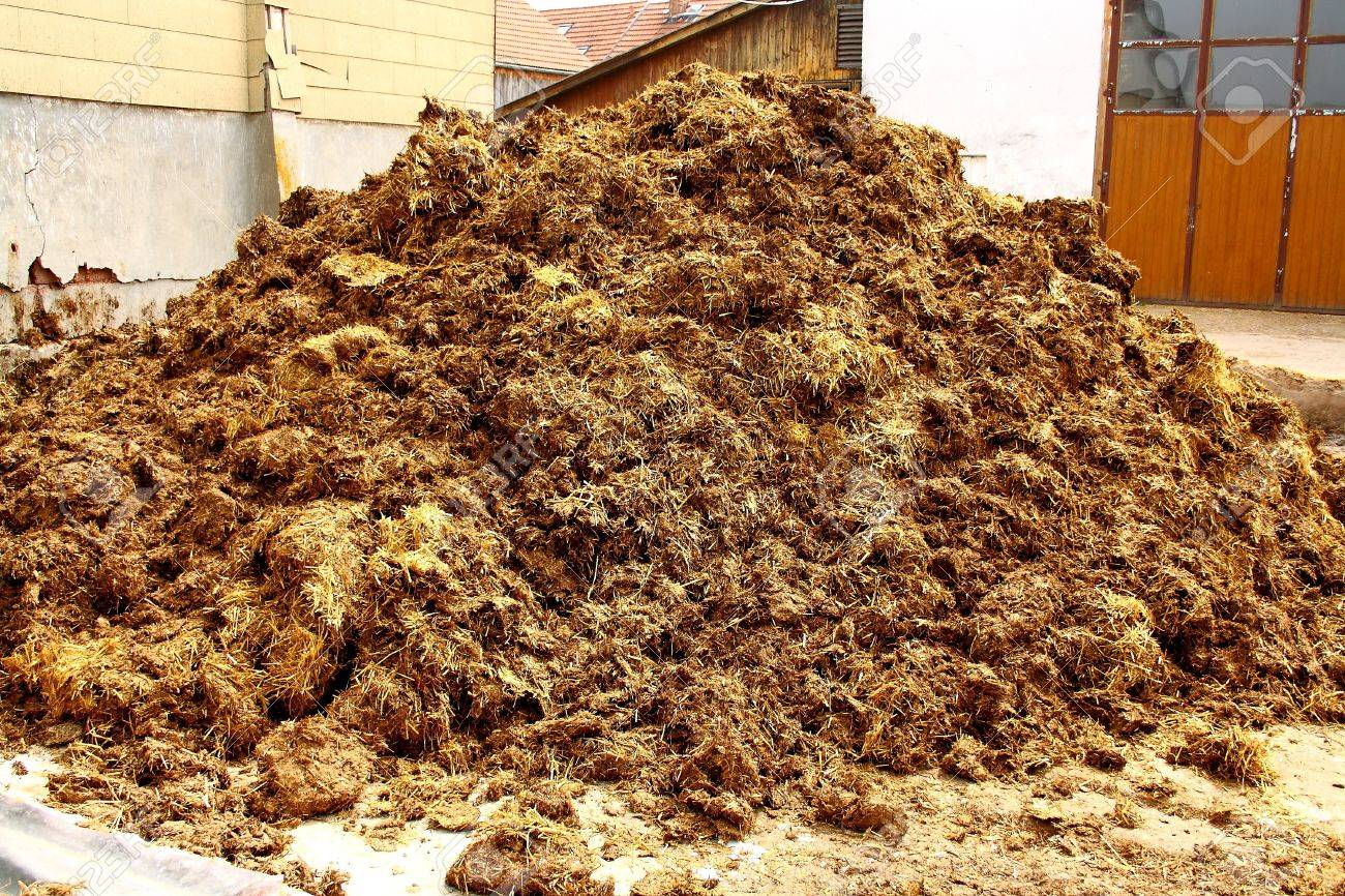 Image result for pile of horse poo