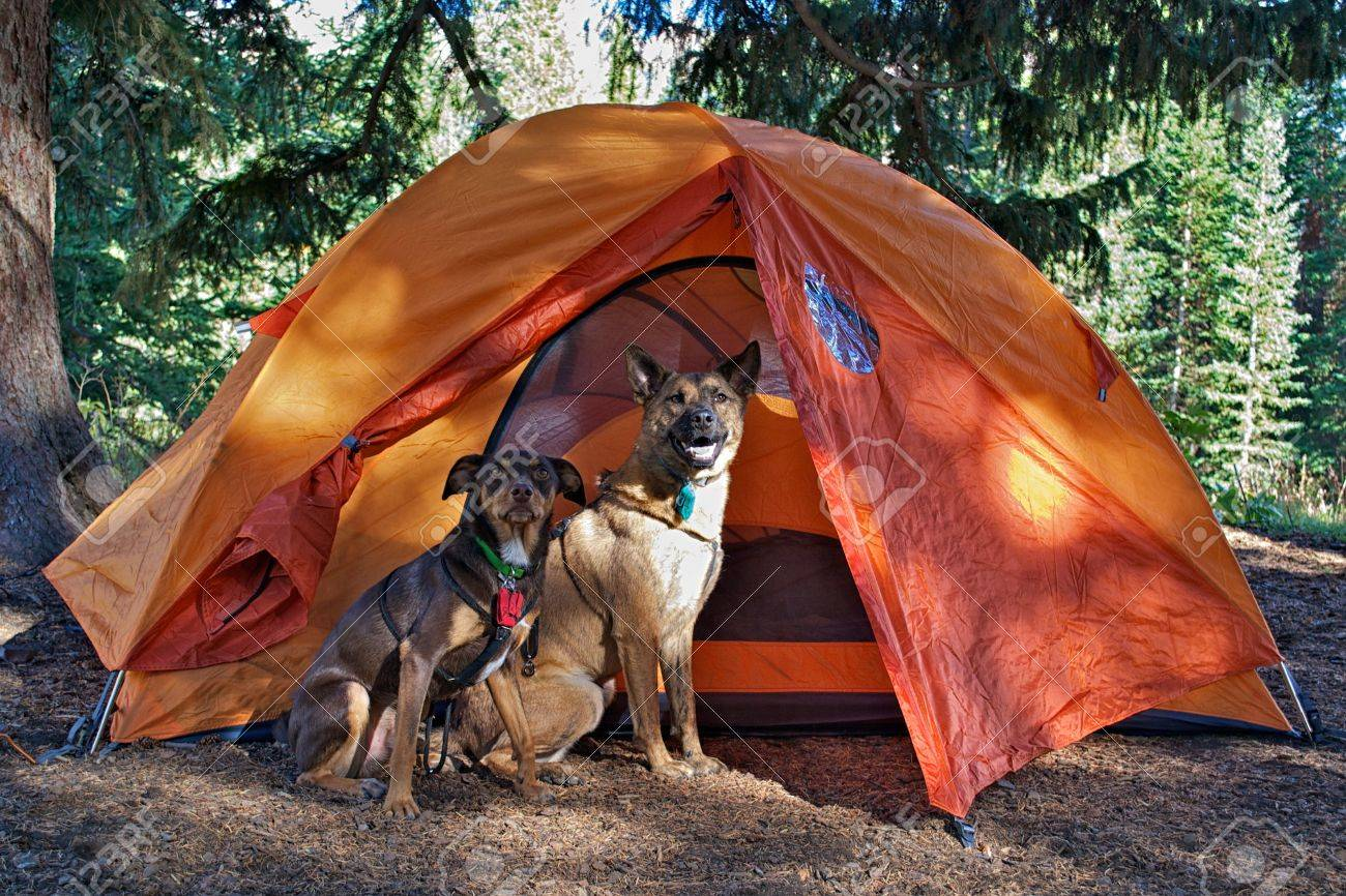 Two dogs outside tent Stock Photo - 17323512
