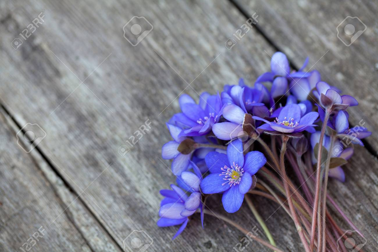 Blue spring flowers on wooden surface stock photo picture and blue spring flowers on wooden surface stock photo 14253364 dhlflorist Choice Image
