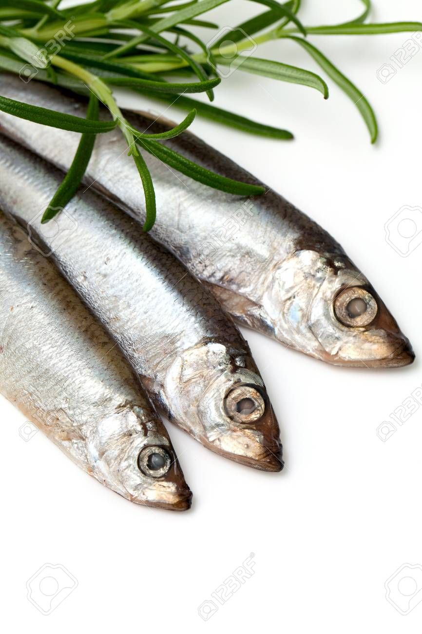 sprat fish and rosemary isolated on white background Stock Photo - 18904202