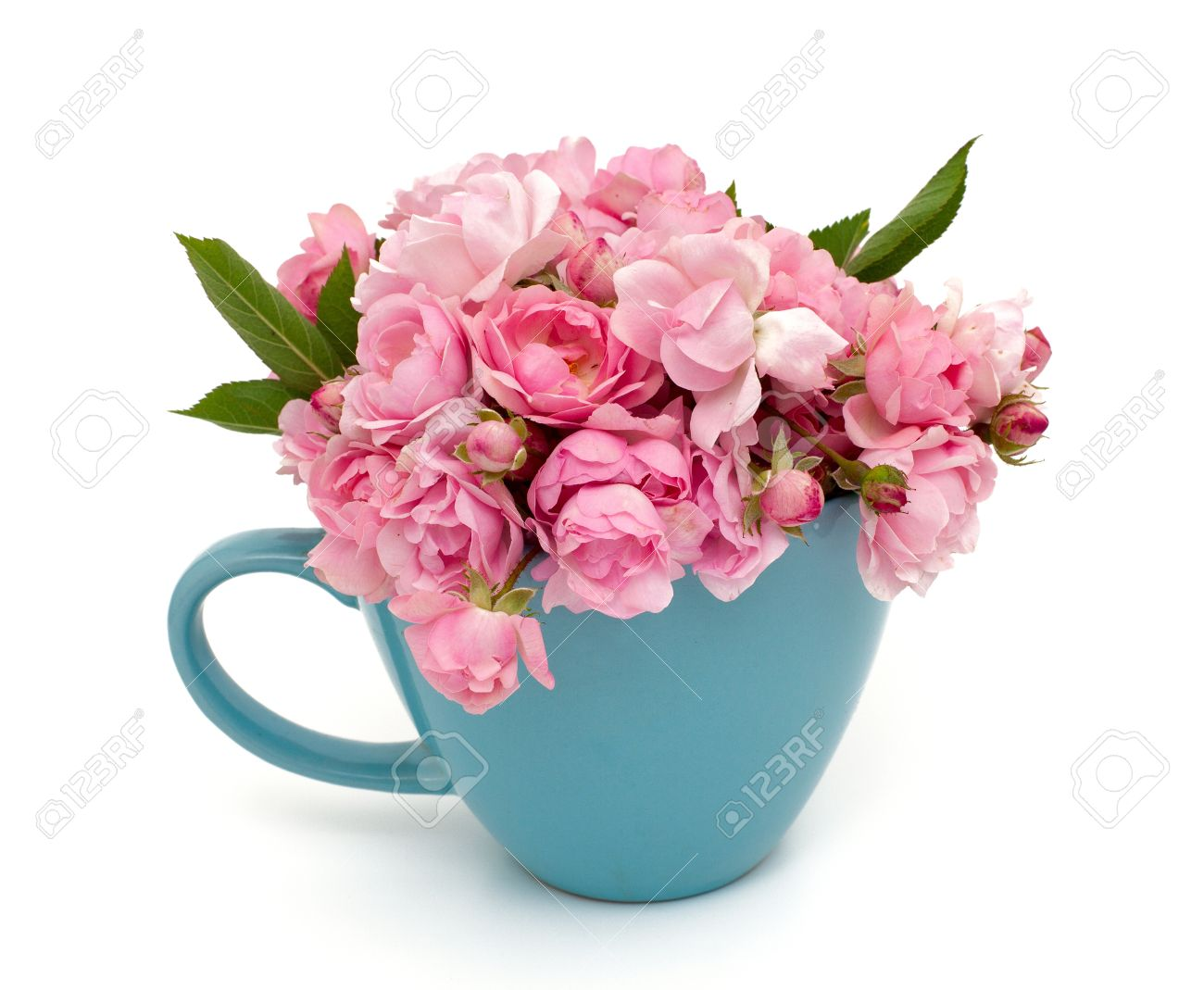 blue cup full of small pink roses over white Stock Photo - 20618152