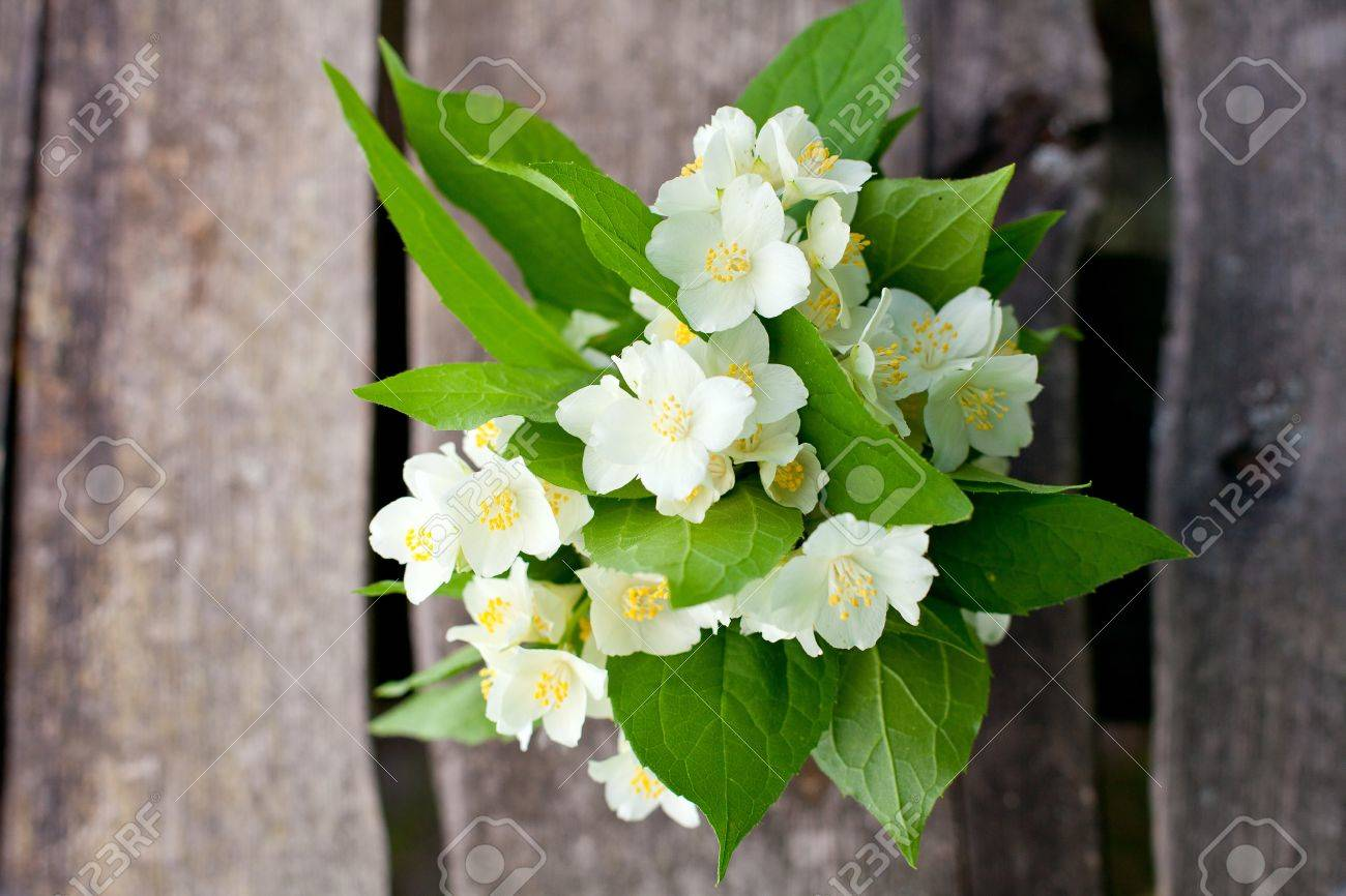 Bunch Of Jasmine Flowers On Wooden Garden Table Stock Photo Picture