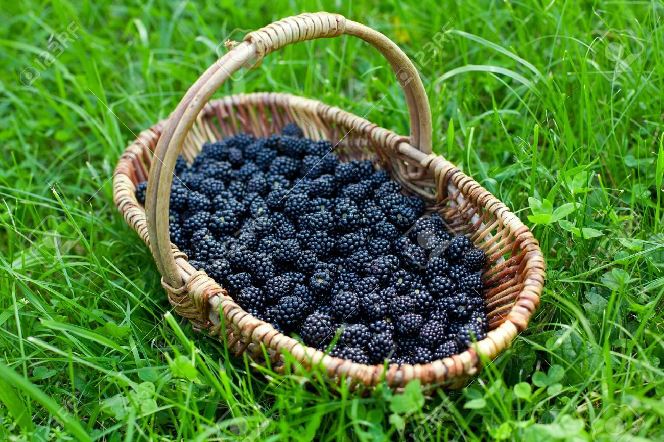 vente chaude en ligne 919e0 f0299 blackberries in basket on grass