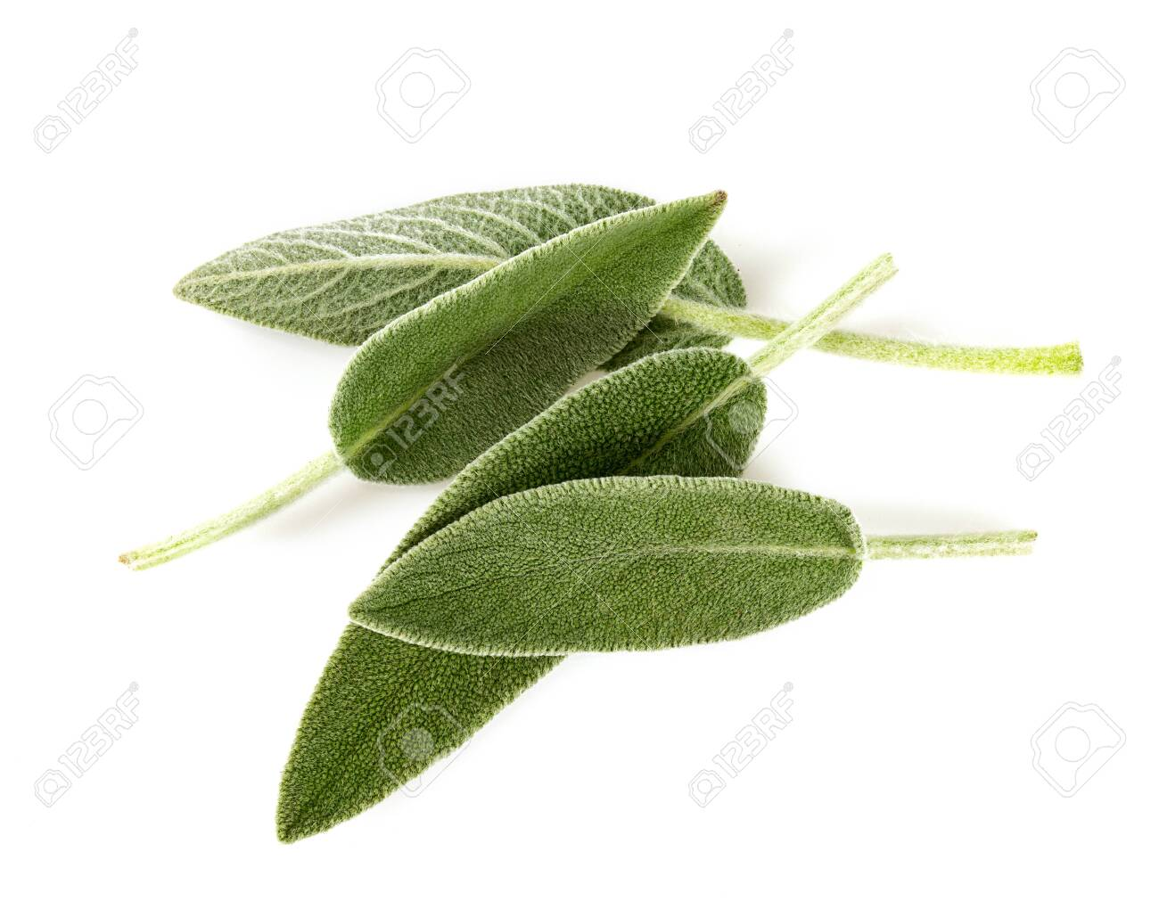 sage leaves isolated on white - 121103989