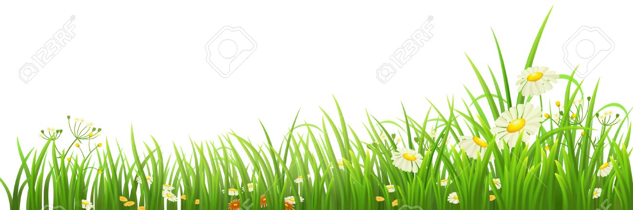 Green grass and flowers on white, vector illustration - 37626064