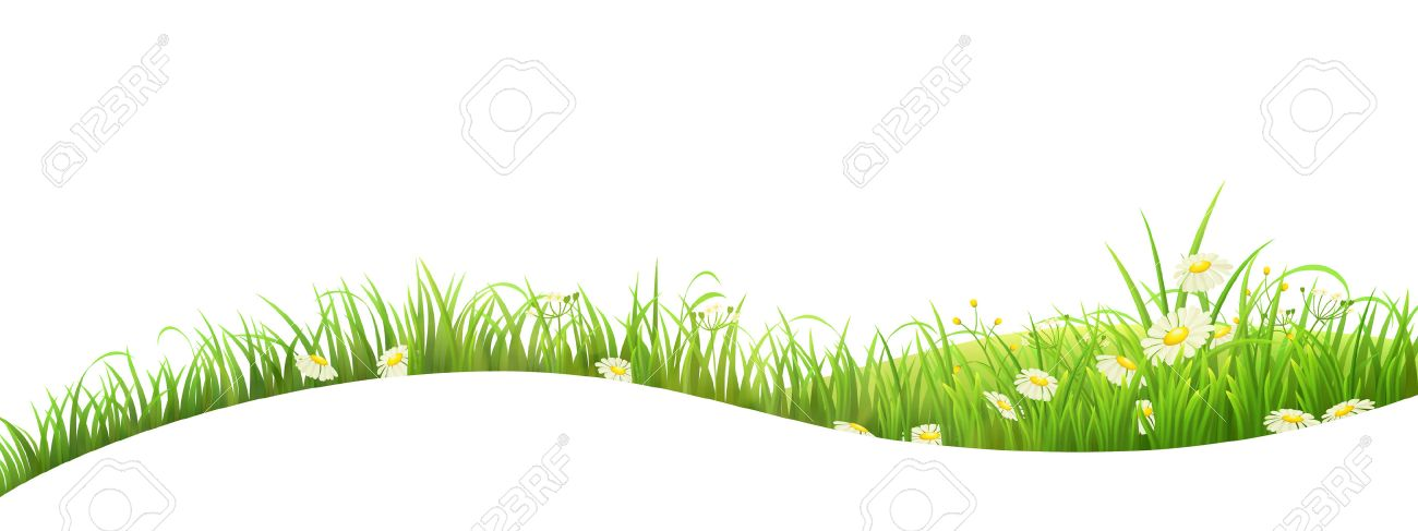 Summer banner with green grass and flowers, vector illustration - 37626104