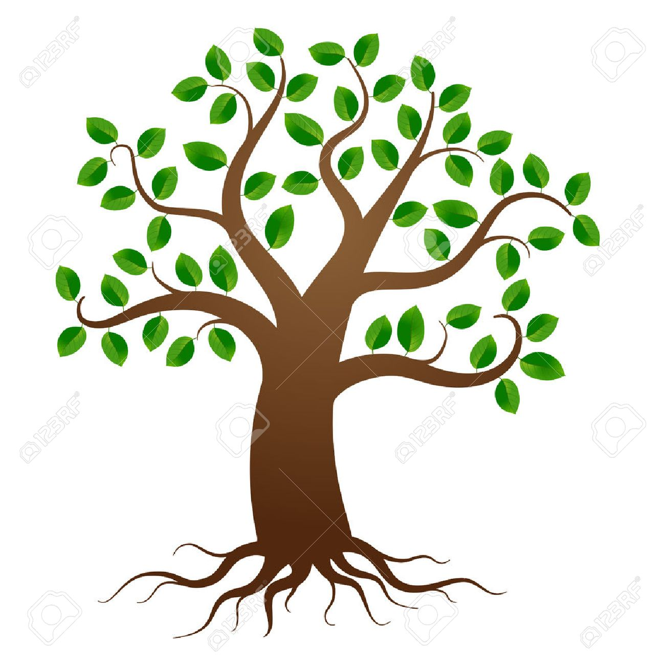 Green tree with roots on white background - 37626107