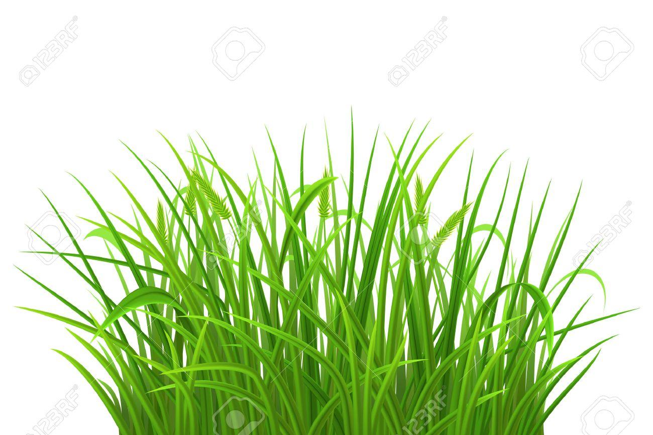Spring green grass on white background, vector illustration - 38610311