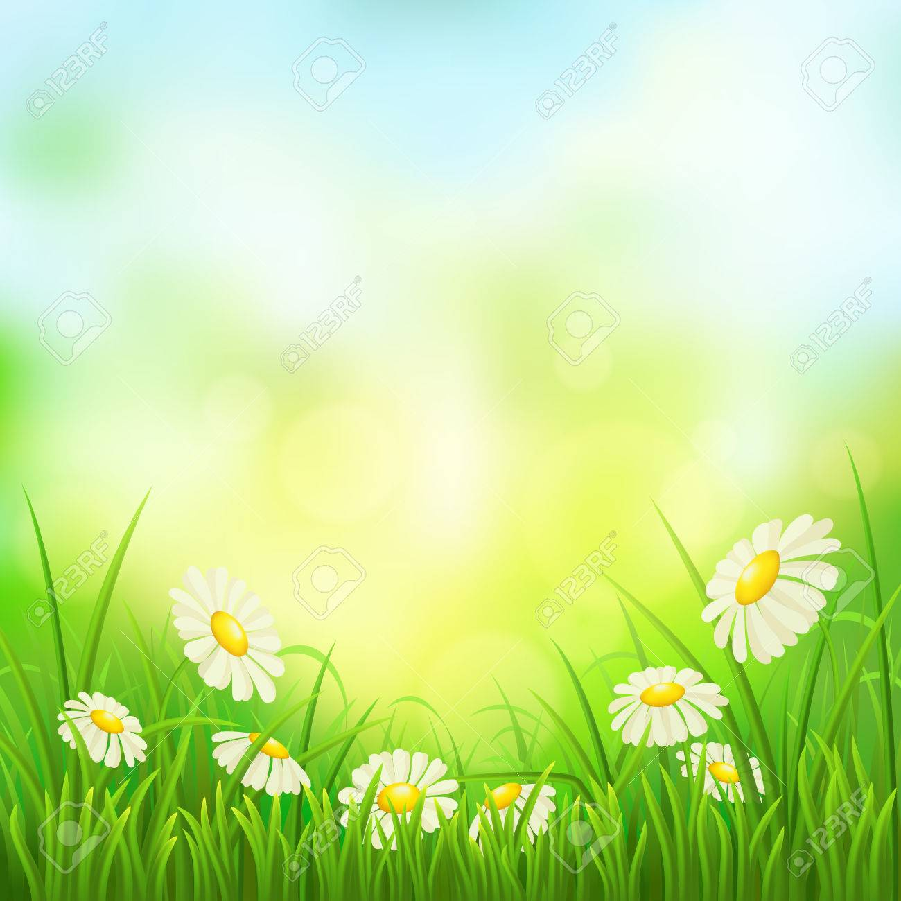 Spring meadow with green grass and daisies, vector illustration - 38610324