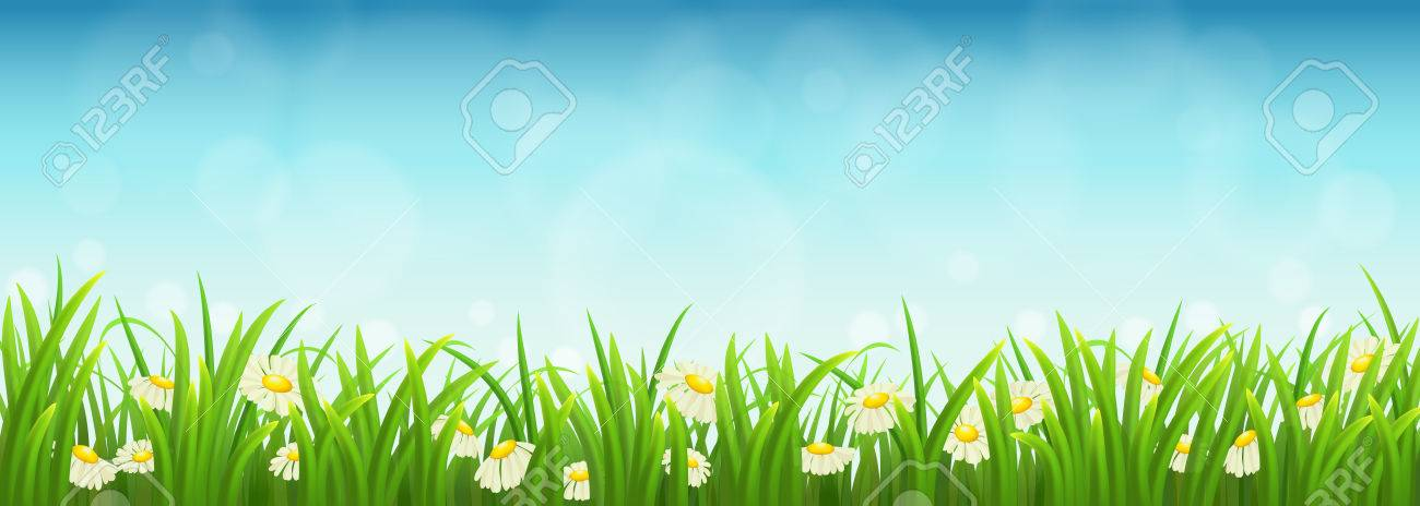 Fresh green grass, daisies and blue sky, vector illustration - 38610329