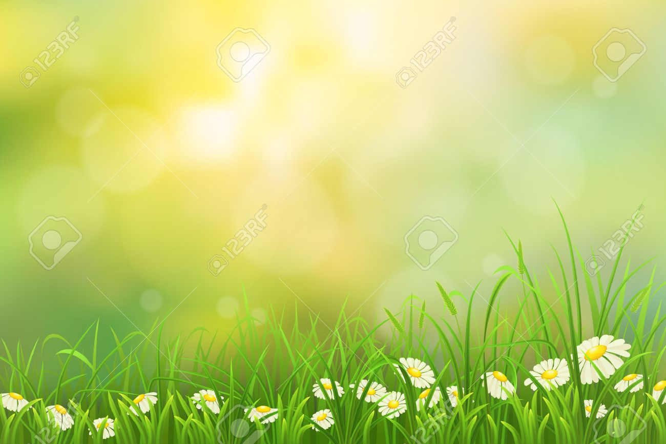 spring nature background with green grass and chamomiles royalty
