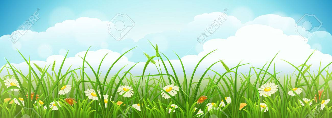 Summer meadow landscape with green grass, flowers and blue sky - 39217573
