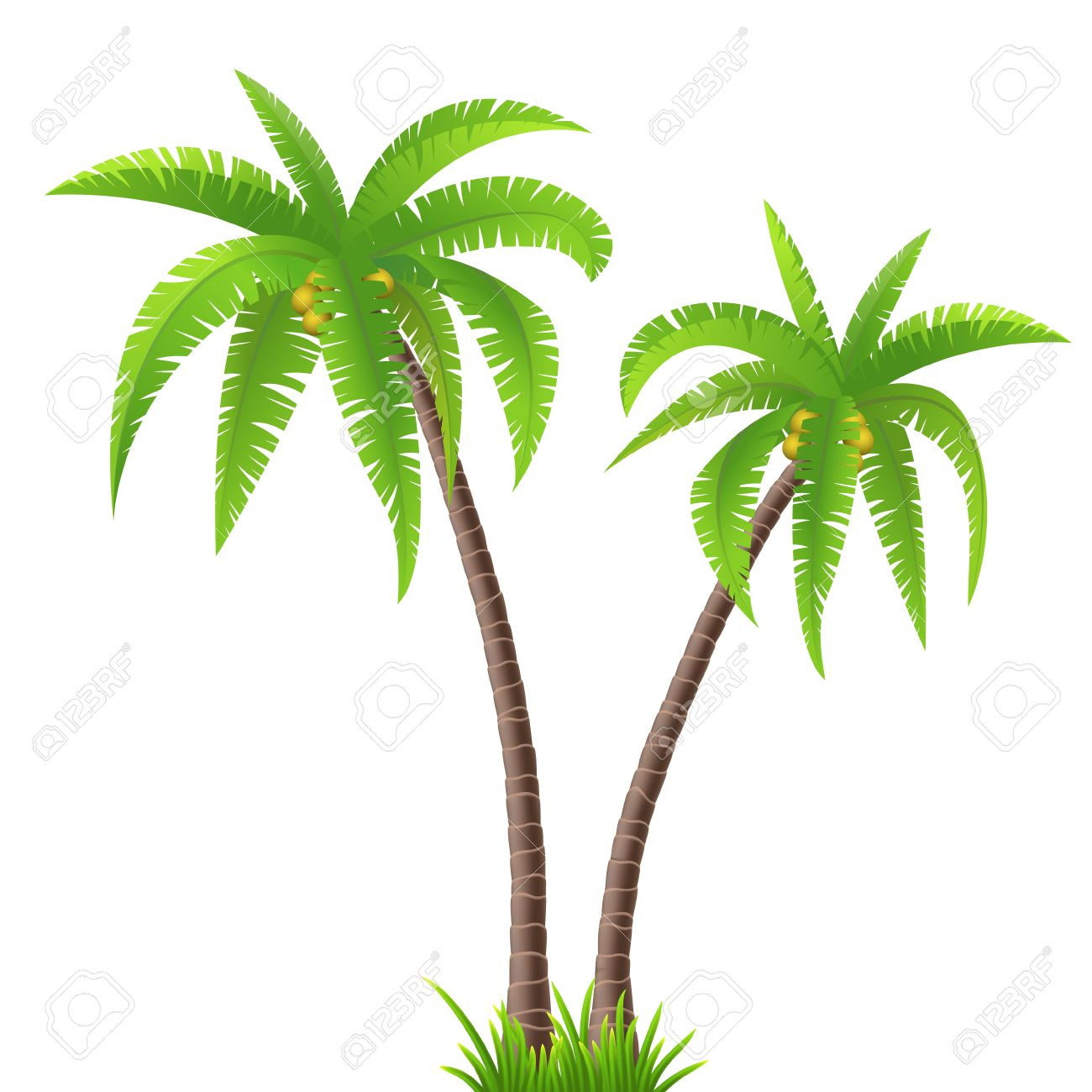 Two coconut palm trees on white background - 39217575