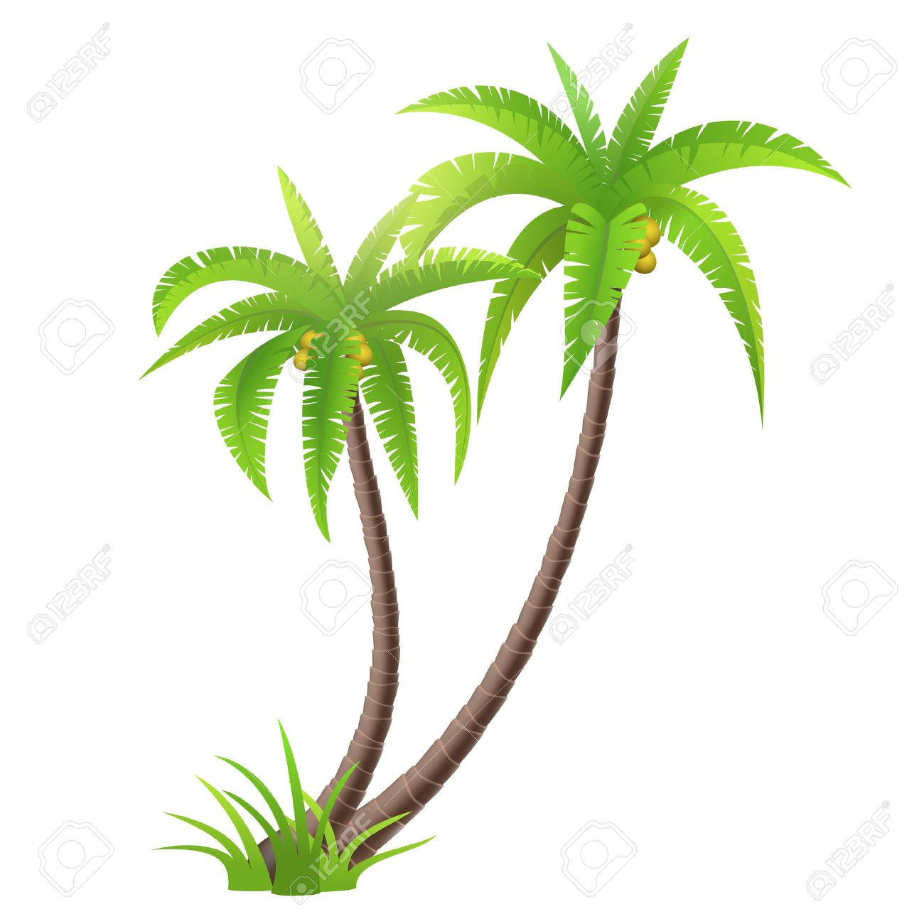 Coconut palm trees isolated on white, vector illustration - 42098283