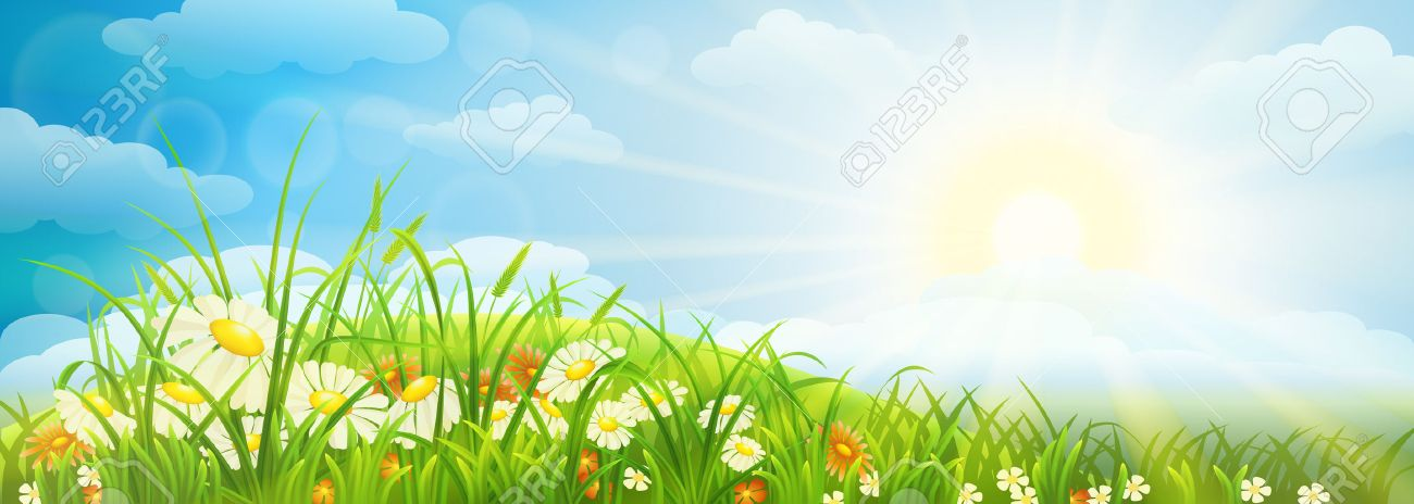 Summer meadow background with grass, flowers, sky and sun - 42098284