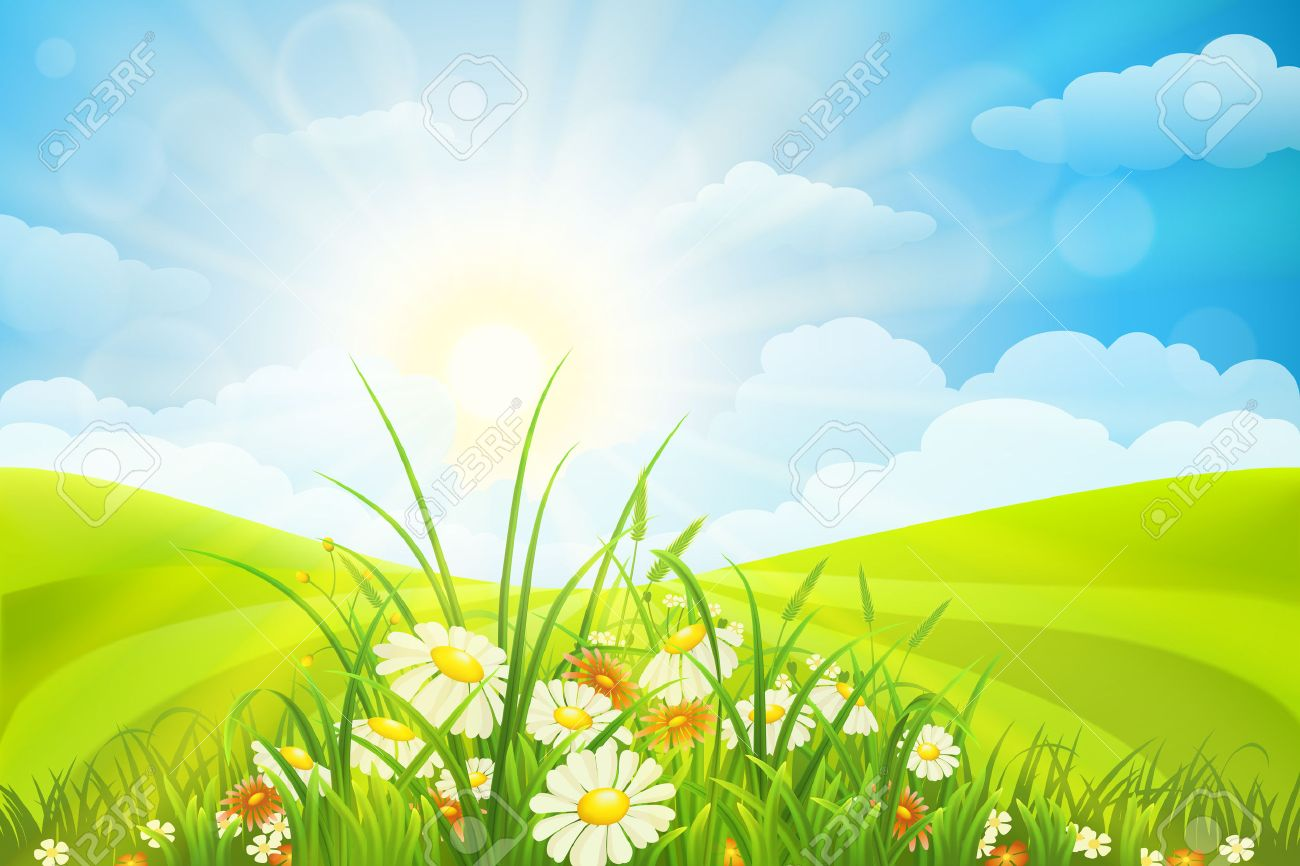 grass field background with flowers. Summer Background With Flowers, Grass, Field, Sky And Sun Stock Vector - 42098389 Grass Field Flowers