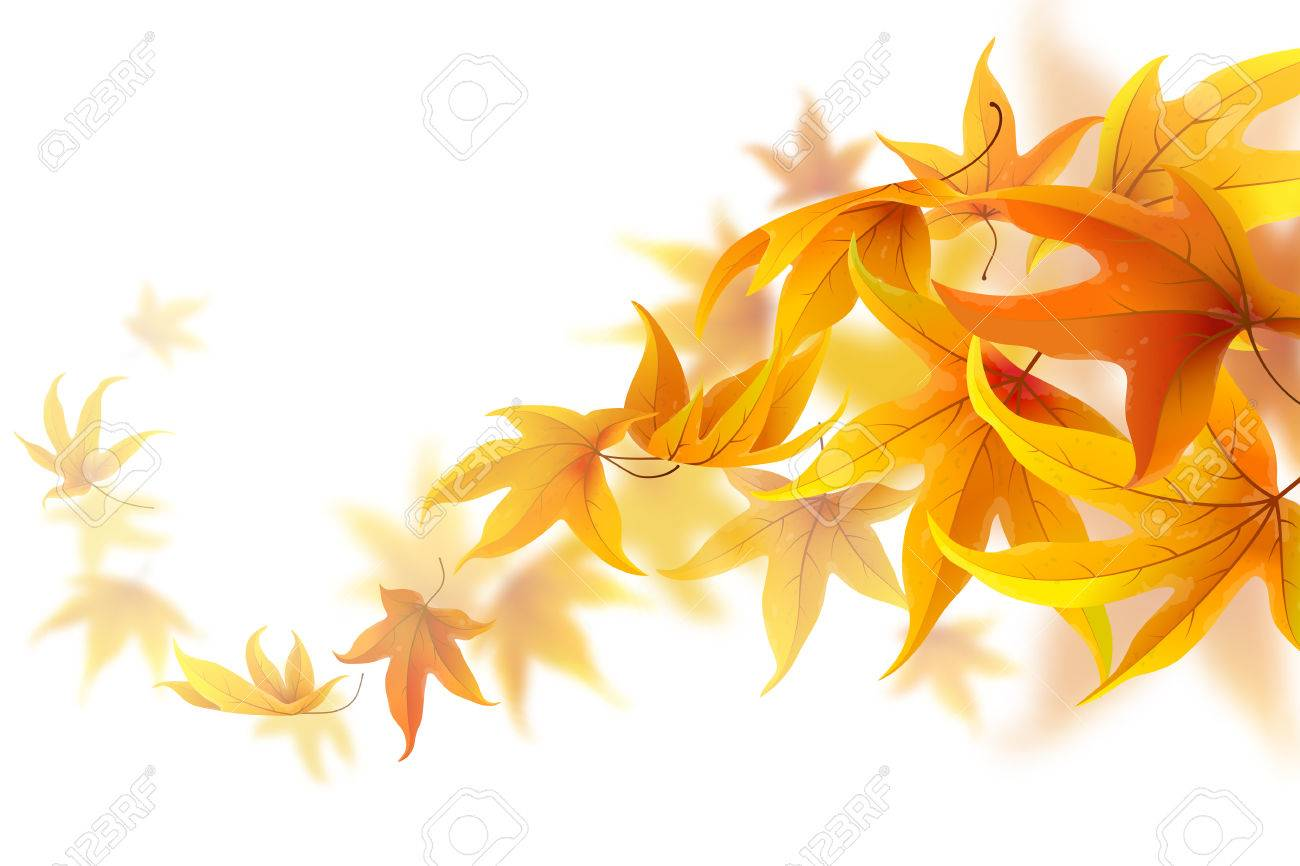Autumn maple leaves falling and spinning isolated on white - 43887594