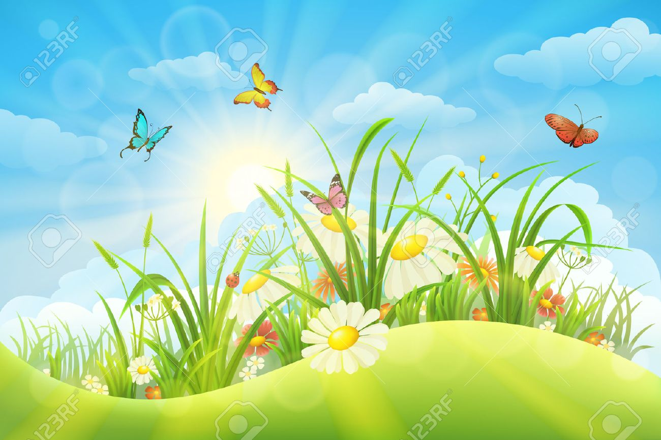Spring summer meadow background with grass, flowers, sun and butterflies - 51571515