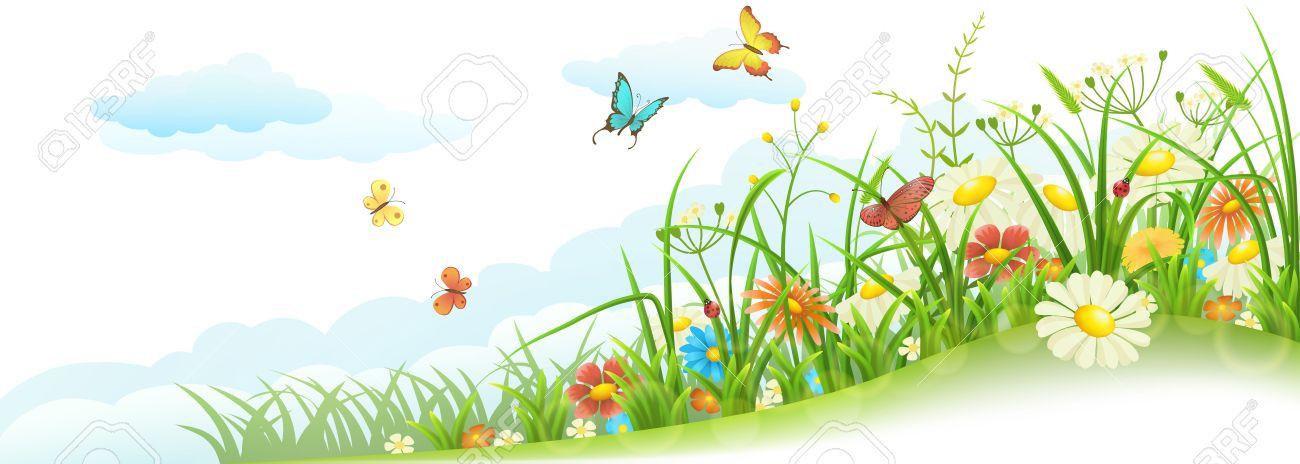 Grüne Frühling Sommer Wiese Mit Gras Blumen Schmetterlinge Und
