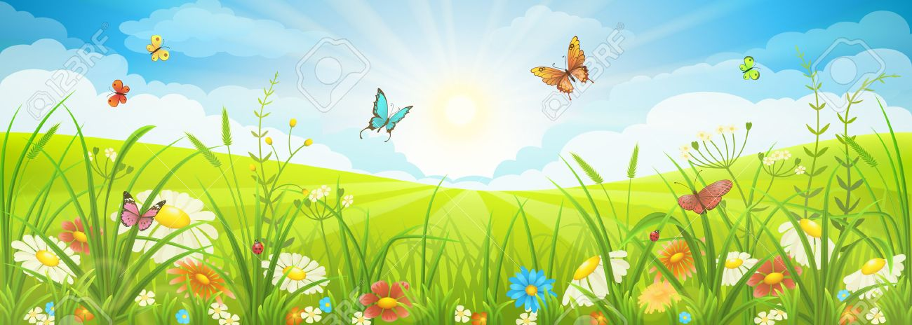 Floral summer or spring landscape, meadow with flowers, blue sky and butterflies - 53040418