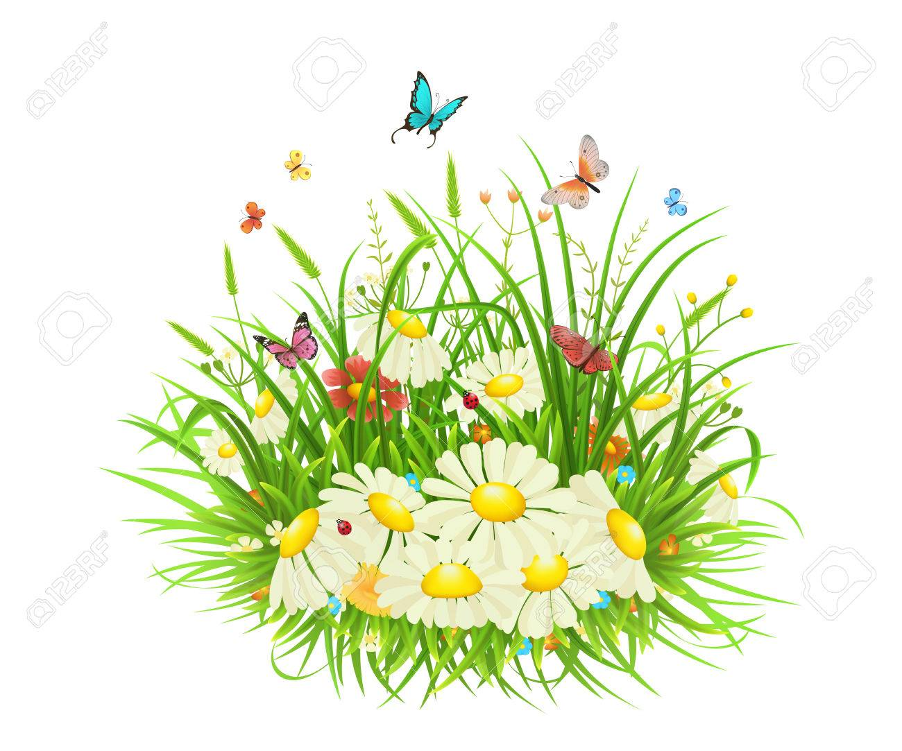 green grass with flowers butterflies and ladybug on white
