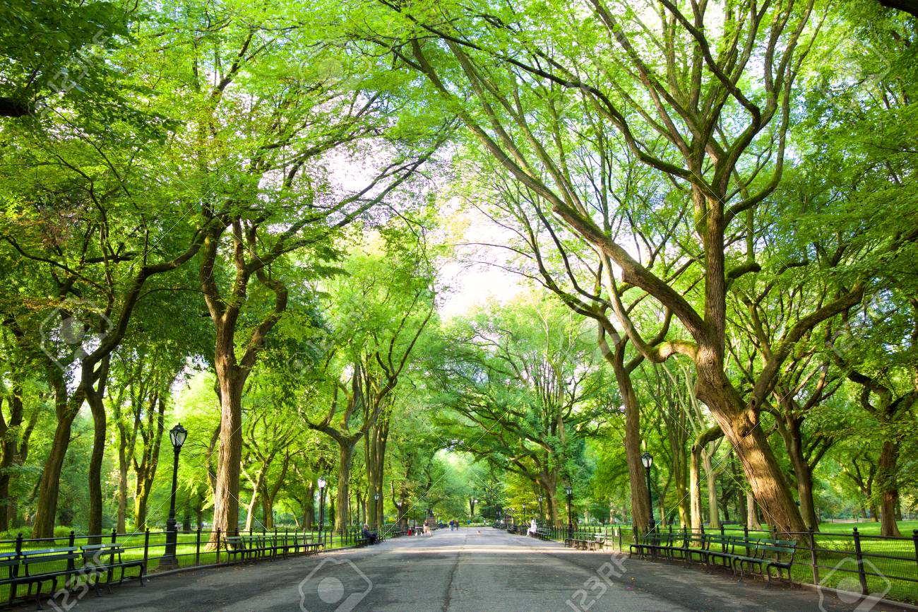 The Mall with American Elms in Central Park, New York - 113177152