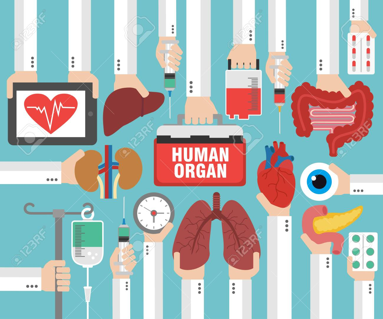 Medical concept design flat. Human organ for transplant. Vector illustration - 147476624