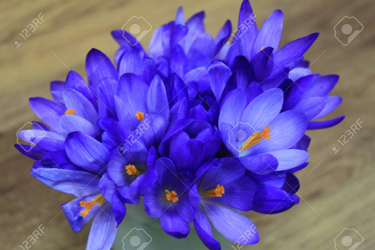 Spring Flowers Crocus Bouquet On Wooden Background Stock Photo