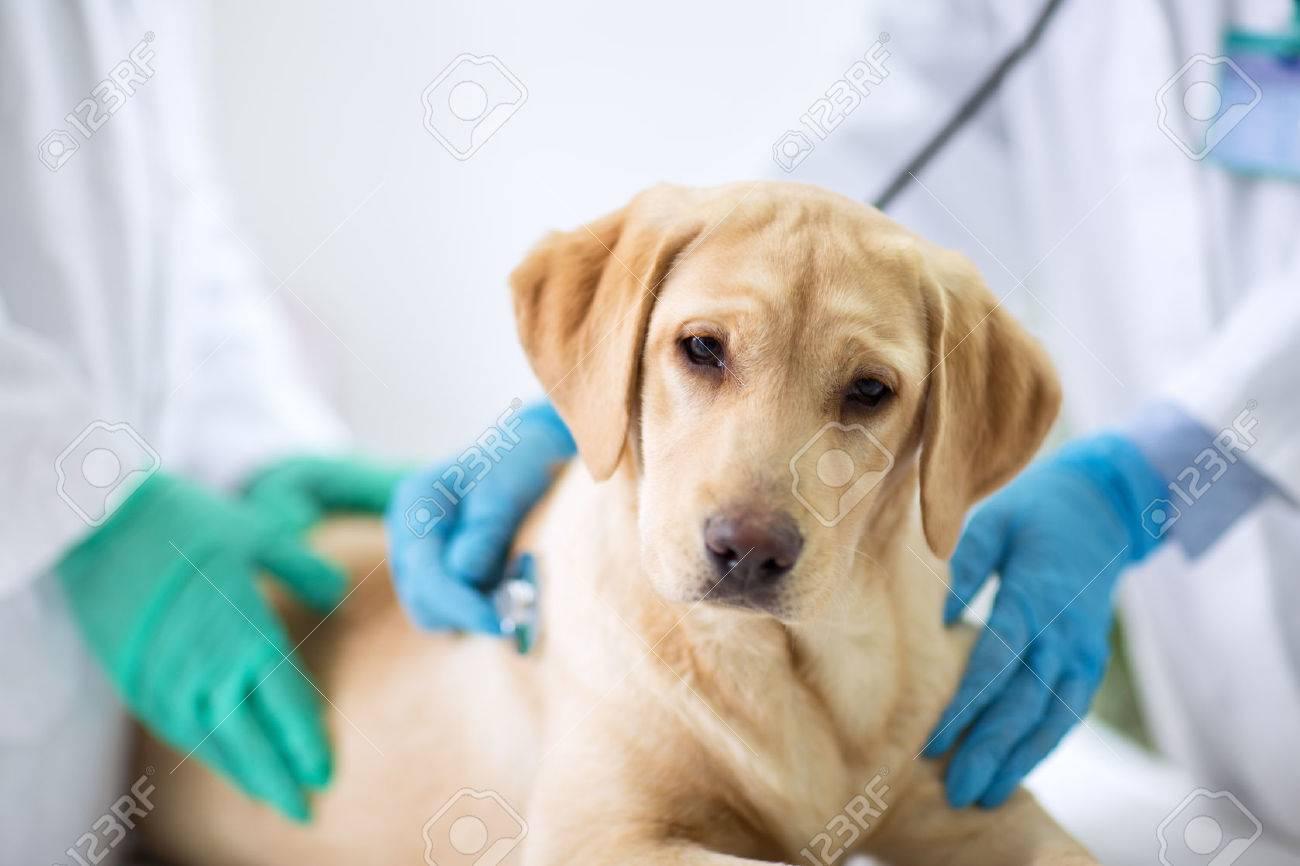 Cute puppy visit vet ambulance - 57026511