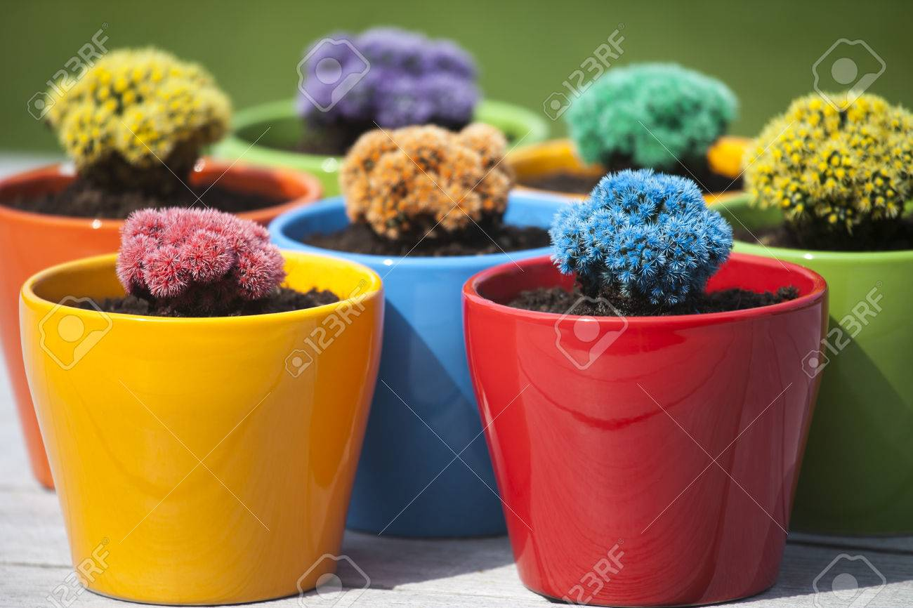 Many Colorful Cacti In Round Flowerpots In Front Of Green Background ...