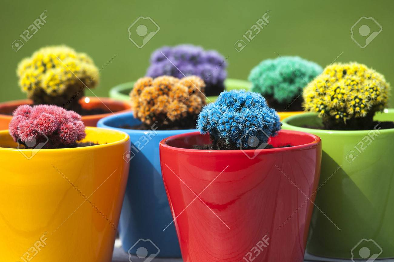 Many Colorful Cacti In Round Flowerpots In Front Of Green Stock ...
