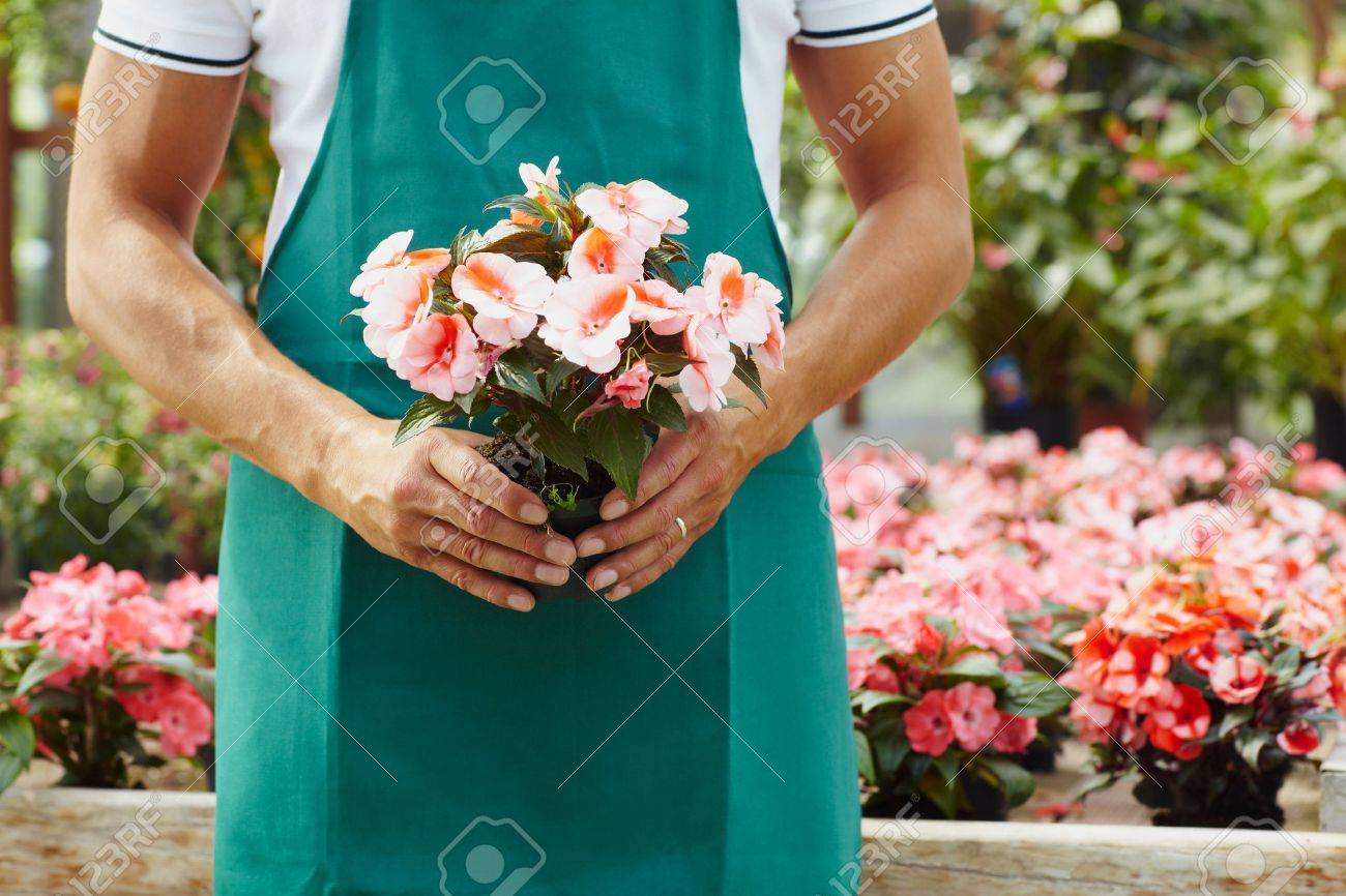 cropped view of male florist holding plant Stock Photo - 5065833