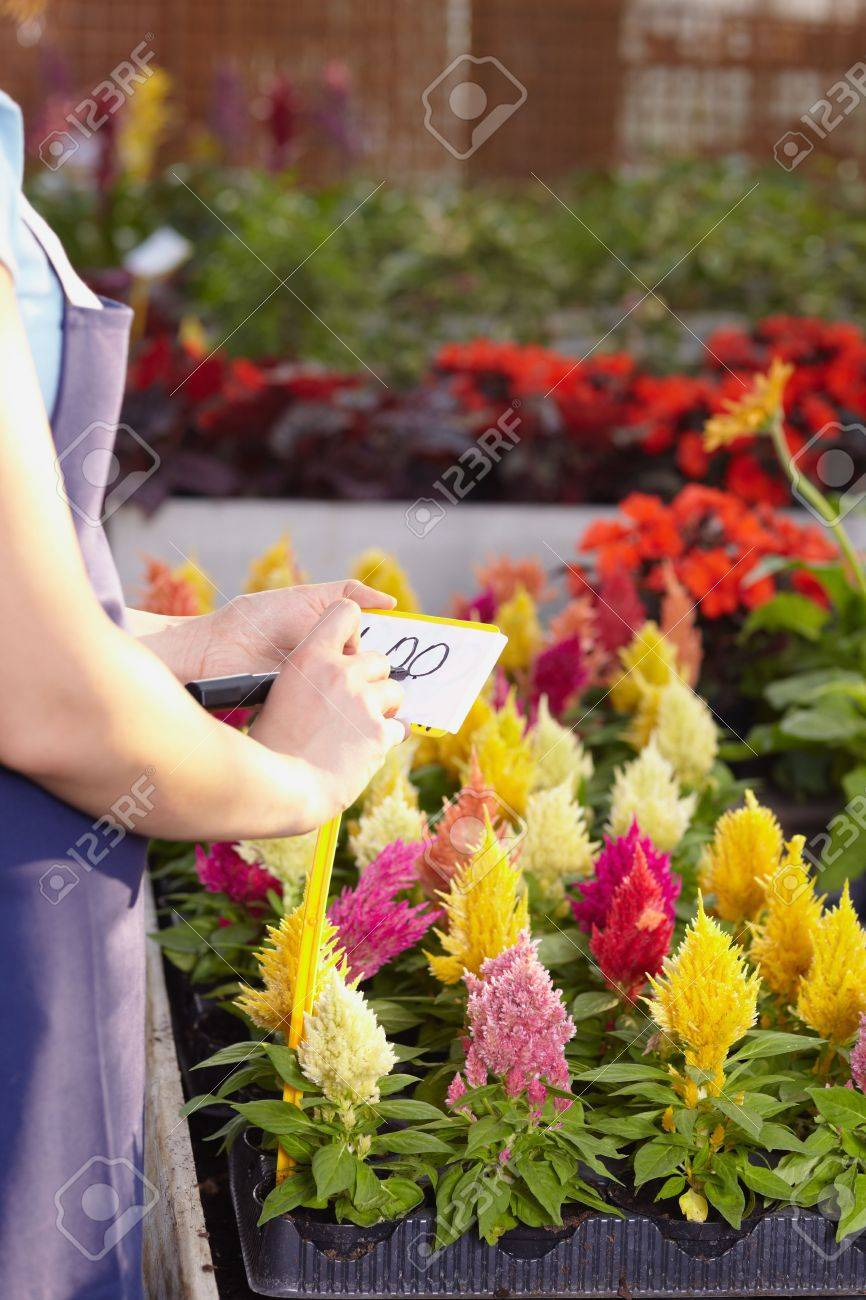 cropped view of female florist writing price on tag Stock Photo - 5187695