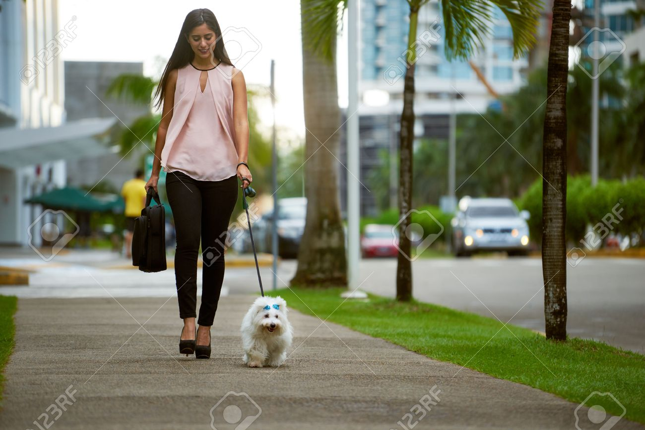 Young business woman with suitcase walking to office with her little dog early morning. The pet is a puppy maltes mixed with french poodle. Concept of animal lovers and modern business lifestyle. - 47088789