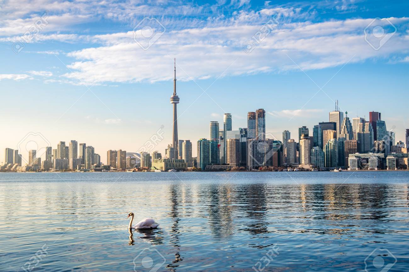 Stock Photo - Toronto Skyline and Swan swimming on lake Ontario - Toronto c0d6ca51f53