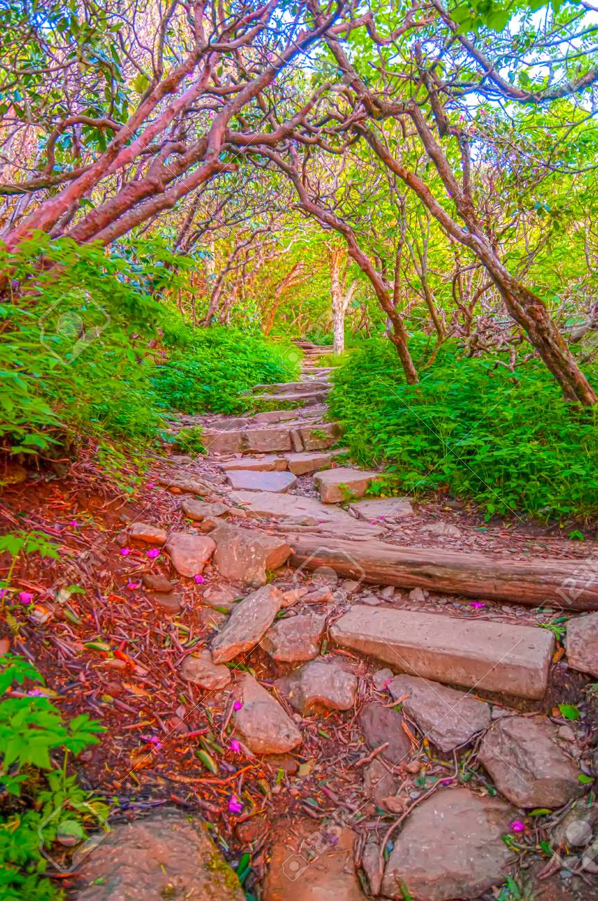 The fog settled in on Craggy Garden Trail Stock Photo - 20555107